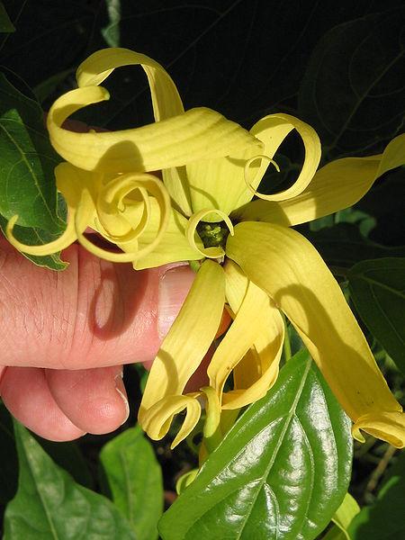 ngọc lan tây hoa của mọi loại hoa